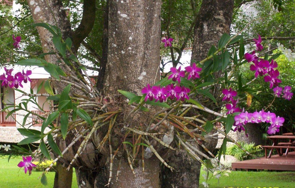 El mejor sustrato para orquideas epifitas