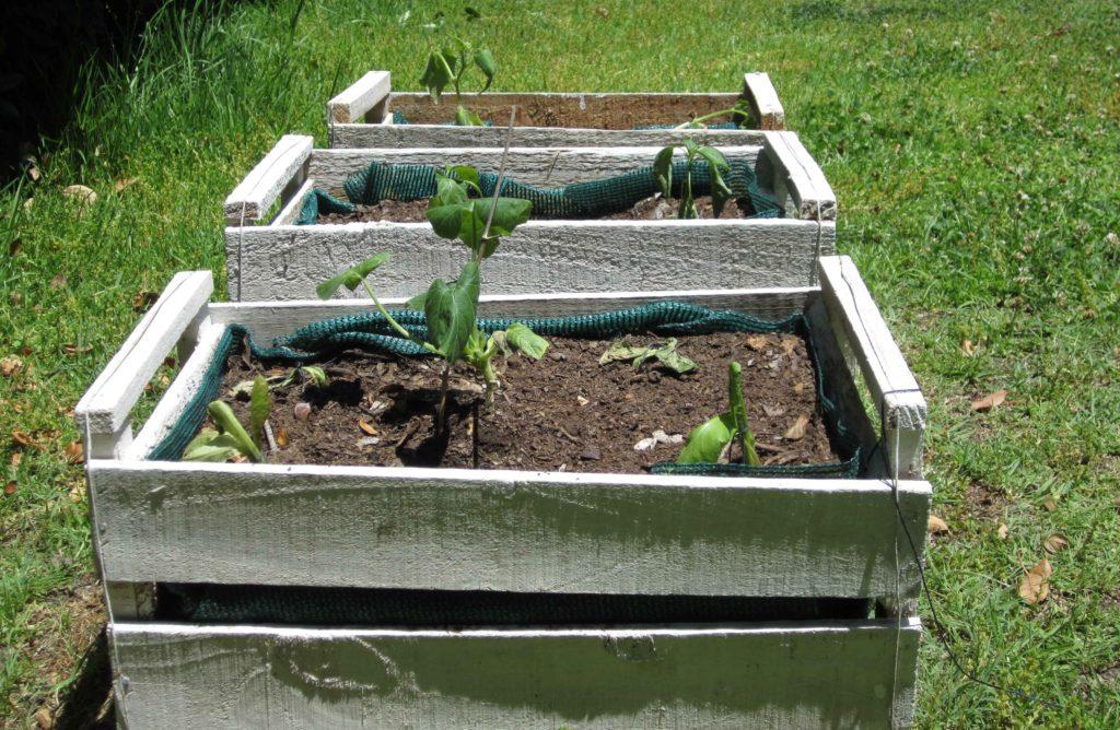 Huerta urbana en cajones de verdura