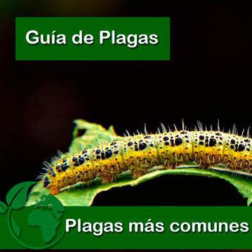 Las 11 Plagas más comunes en tu Huerto