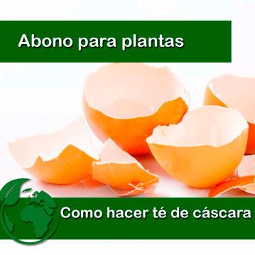 Te de cascara de huevo