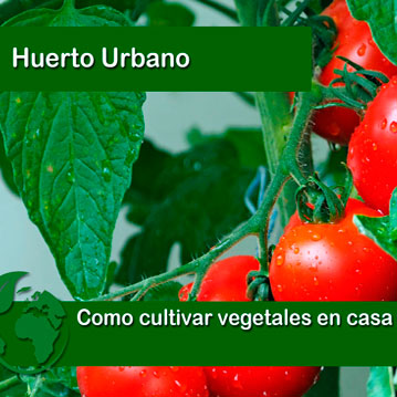 Como cultivar vegetales en casa