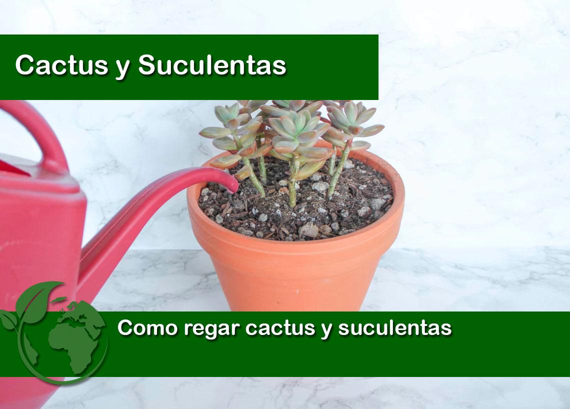 Como regar cactus y suculentas
