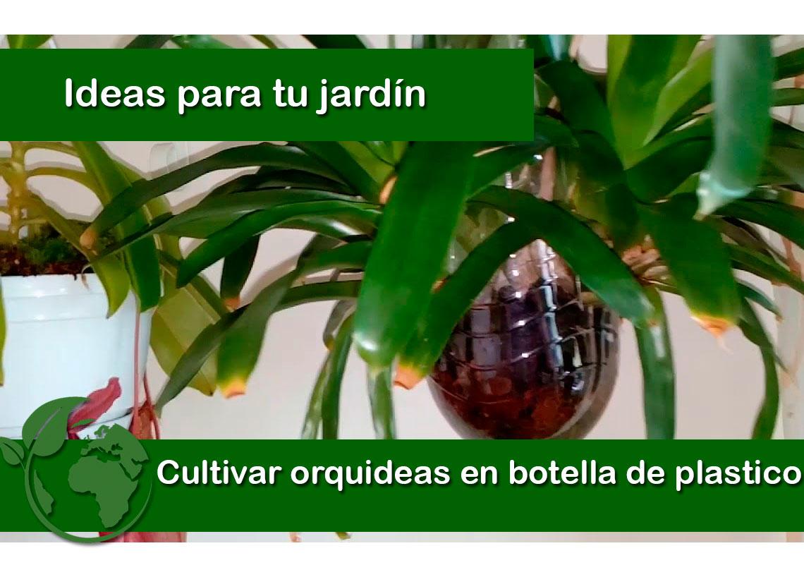 cultivar orquideas en botella de plastico