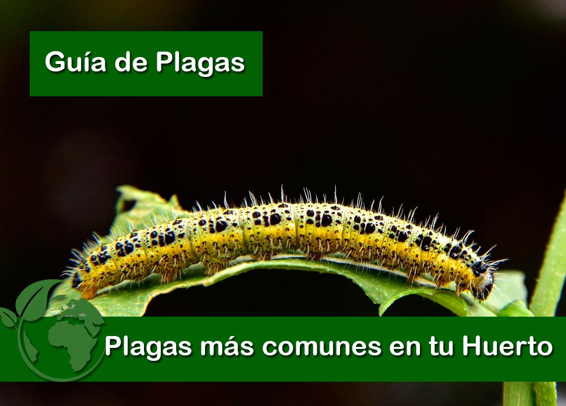 plagas más comunes en tu huerto
