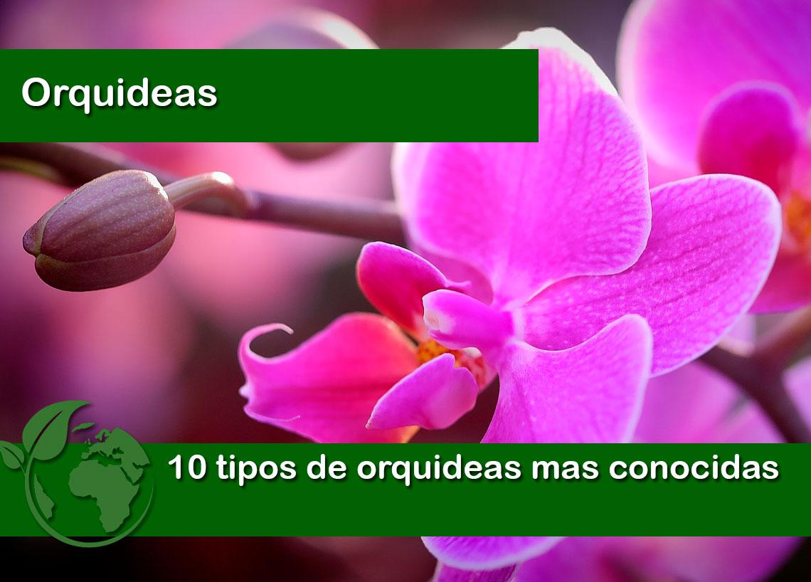 10 tipos de orquideas mas conocidas