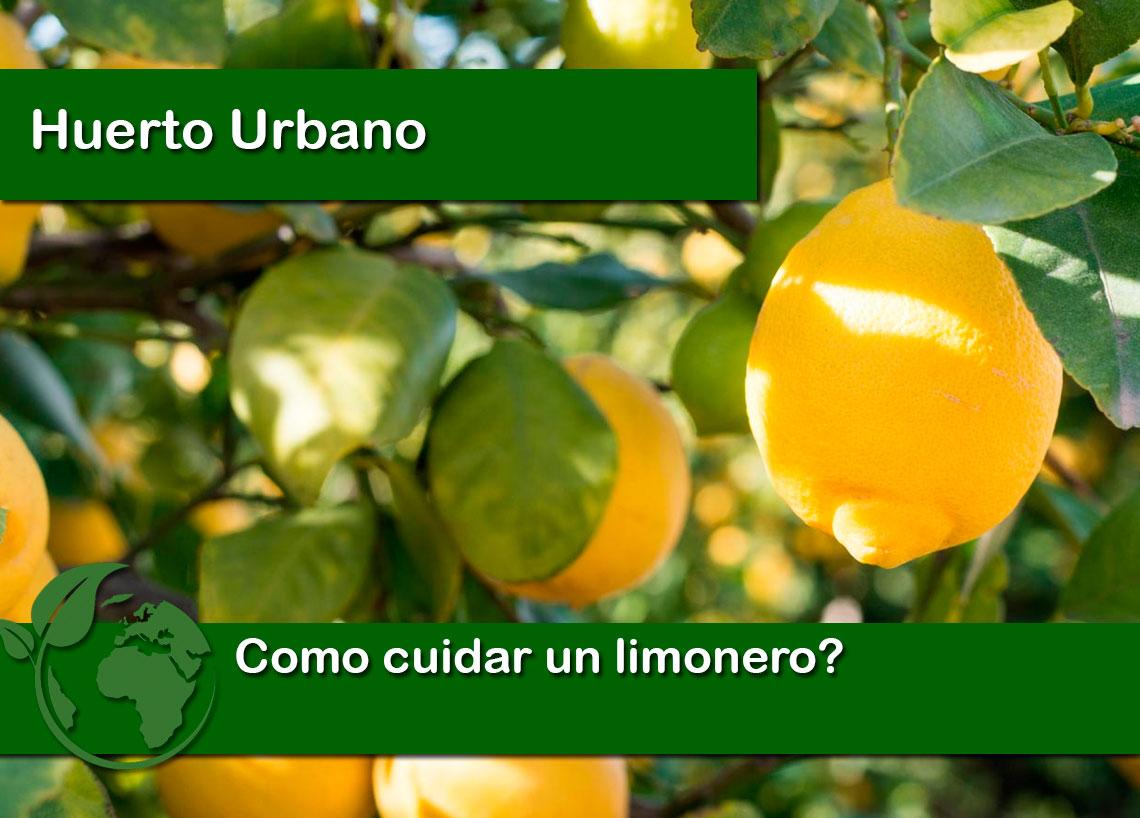 Como cuidar un limonero