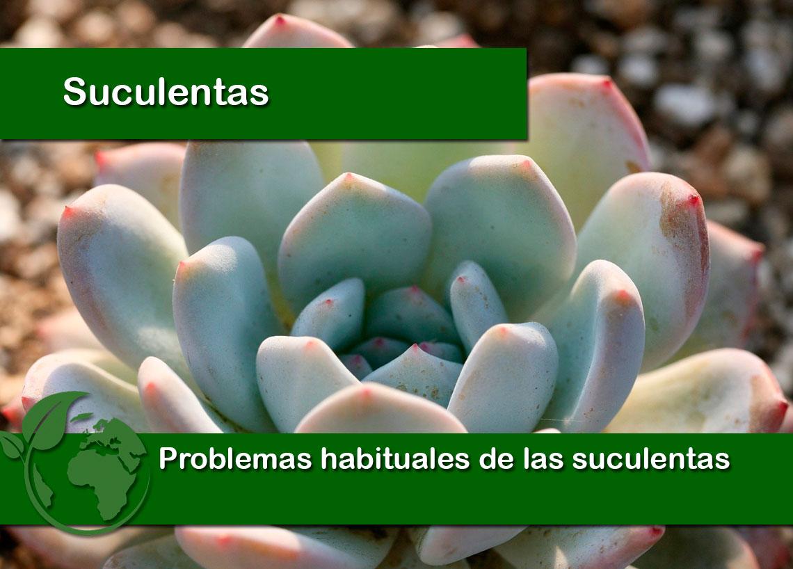 Problemas habituales de las plantas suculentas