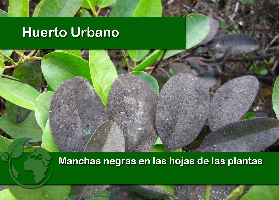 manchas negras en las hojas de las plantas