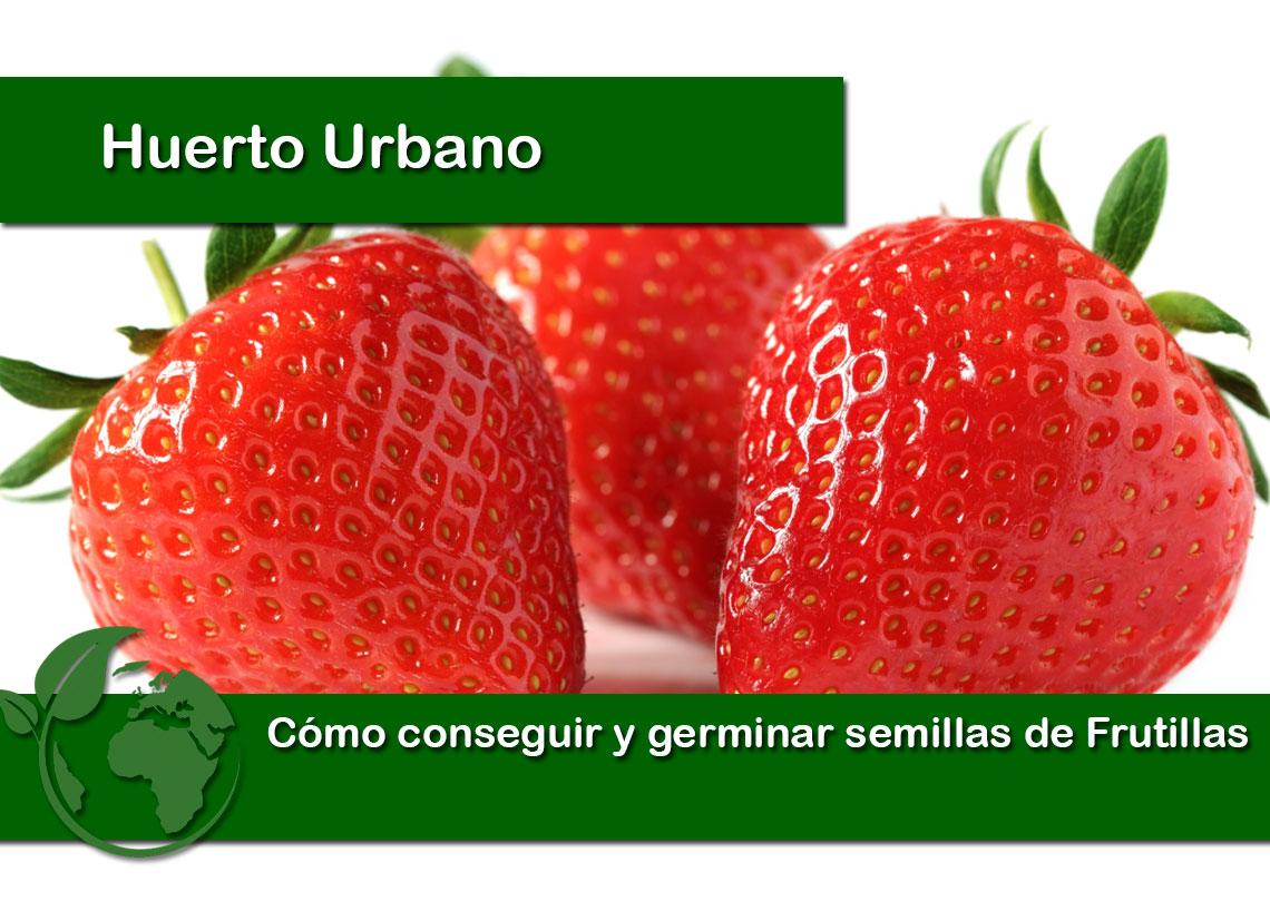 Como conseguir y germinar semillas de Frutillas