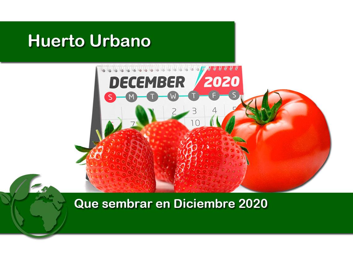 Que sembrar en Diciembre 2020