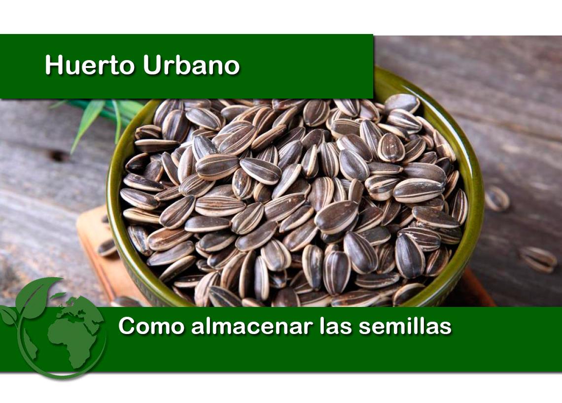 como almacenar las semillas