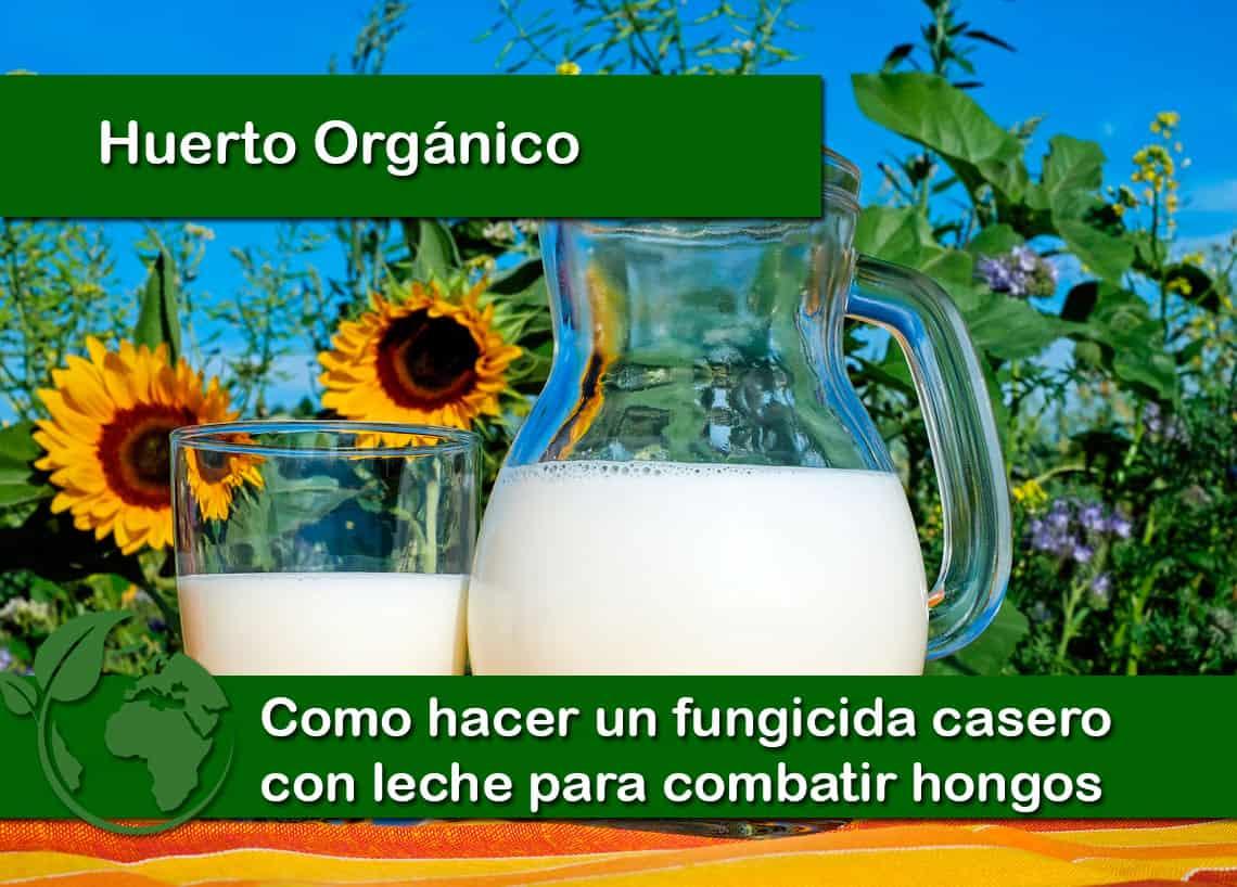 Como hacer un fungicida casero con leche para hongos