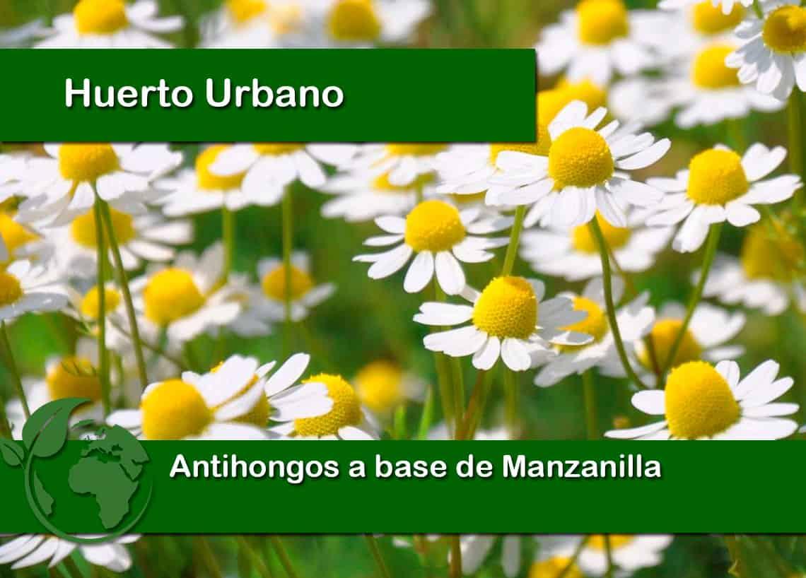 Antihongos con manzanilla