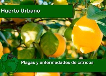 Plagas y enfermedades de citricos
